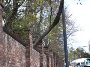 Baum haengt ueber Mauer